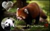 Animaux-Protectiion