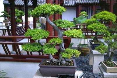Blog de pop love japon page 2 blog de pop love japon for Plantes japonaises