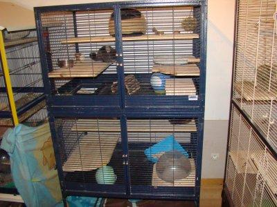 cage de Yoshi