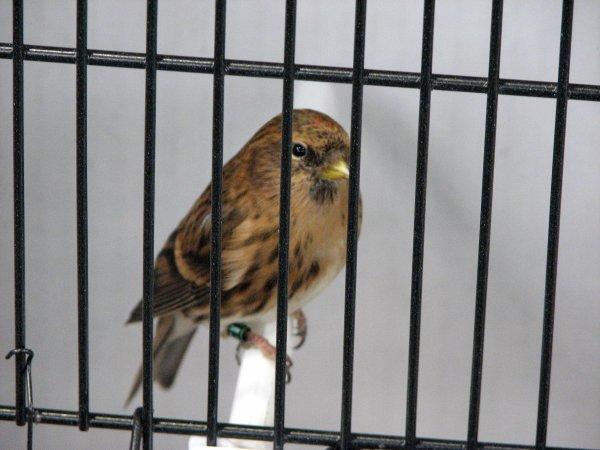 Espaço Agros - Vila do Conde - Dia de Julgamentos de aves