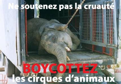 Les animaux dans les cirques