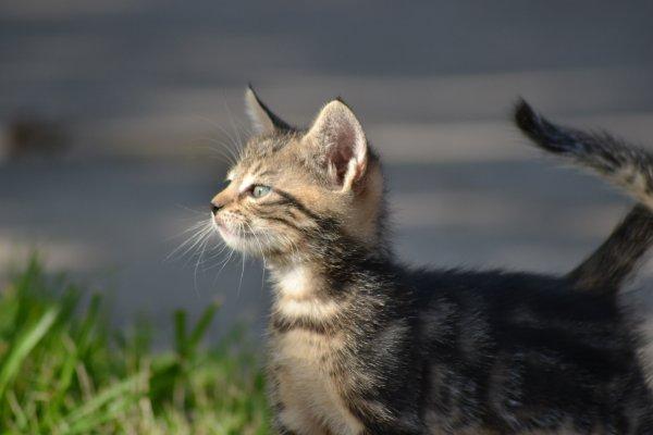 Petits chats de l'�curie