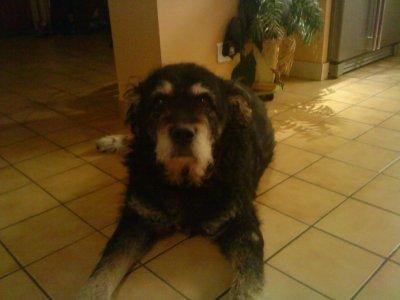 mon chien qui est mort gary laurelinedu28120. Black Bedroom Furniture Sets. Home Design Ideas