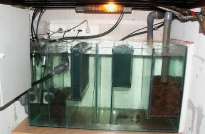 une maison saine piranhas maintenance et reproduction en aquarium. Black Bedroom Furniture Sets. Home Design Ideas