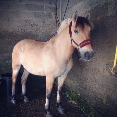 rencontre divine cheval
