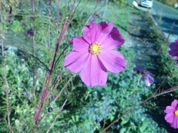 camaieux rose carmin