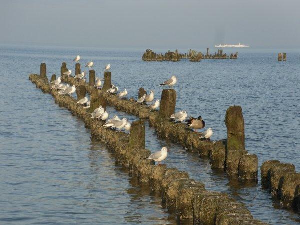 Traumhafte  Ostsee