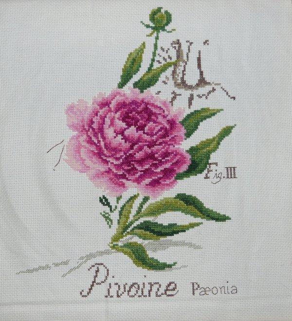 Etudes Botaniques - La Pivoine (1)