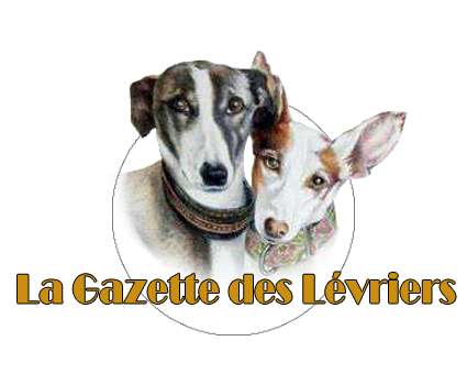 Scooby France ,nos galgos � l'adoption