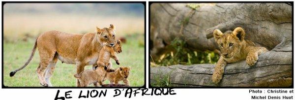 Fiche n�2 : Le lion