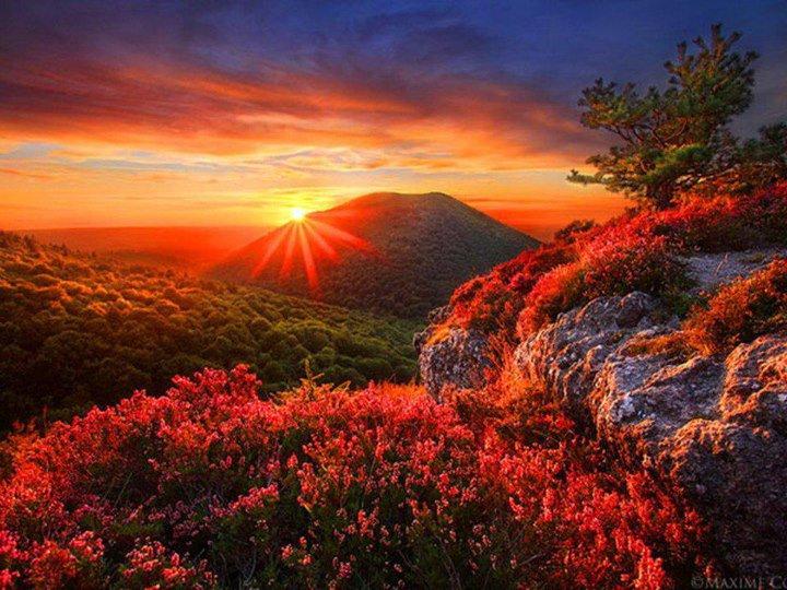 je vous souhaite � tous une super bonne soir�e avec les images que j'aime :) ♥♥♥♥ bisous � demain........................