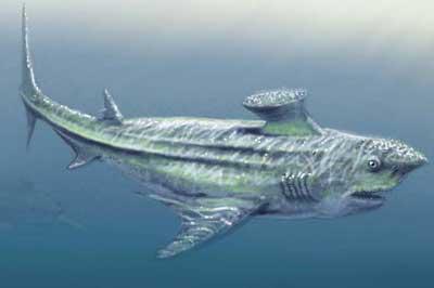 Les esp ces de requins les seigneurs de la mer requin - Dinosaure marin carnivore ...