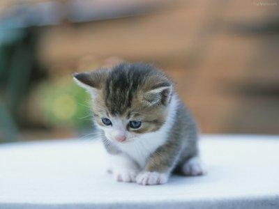 Gimo, le chat le plus mignon du monde avec des yeux comme des billes