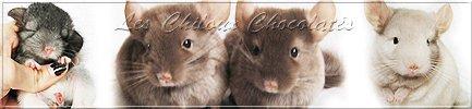 Les Chiloux Chocolat�s sur Facebook