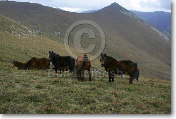 Blog de races of chevaux page 16 les races de chevaux - Combien de temps pour porter plainte pour coup et blessure ...