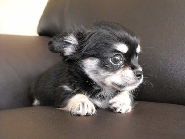 ce petit mec attend une maman qui l'adoptera