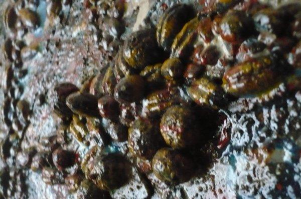 Noyaux des dattes dans un tableau !