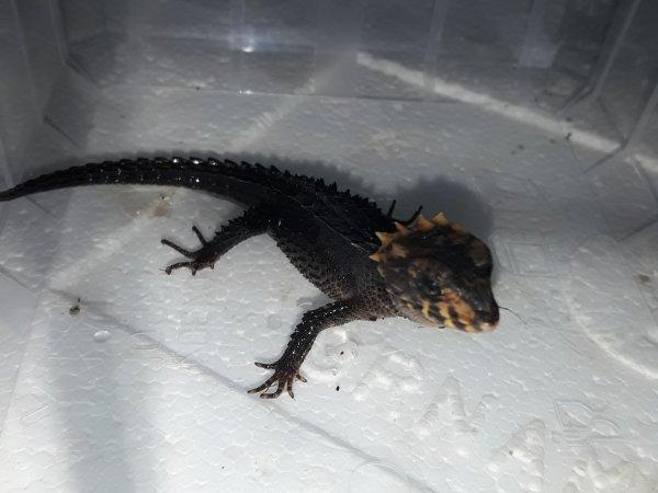 des nouvelle de Mini Crocs