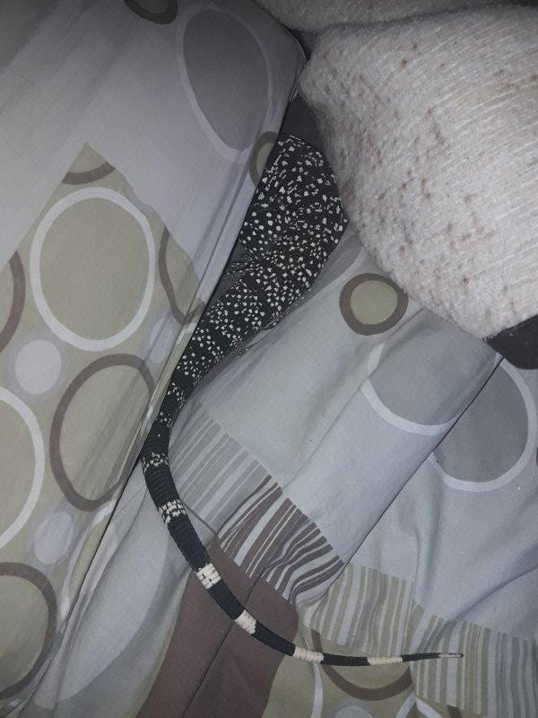 Misa partie en aventure sur mon lit !! , elle devient très sociable !!!