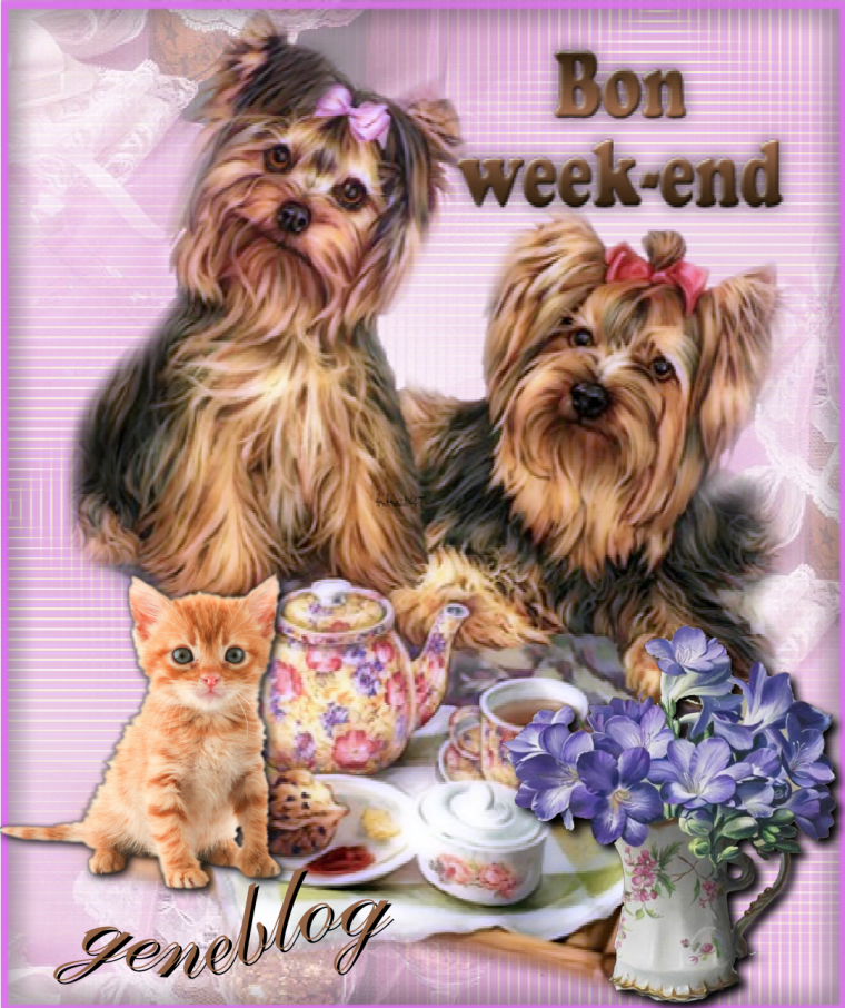 Bon week end a tous nos amis les animau - Bon week end a tous ...