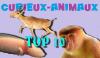 @Bient�t @Top10 Des animaux les plus curieux ! Sur le Blog Curieux-Animaux