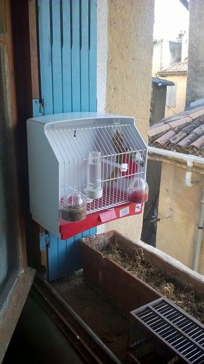 Nouvelle cage pour mon ch...
