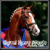 cheval-horse-pferde