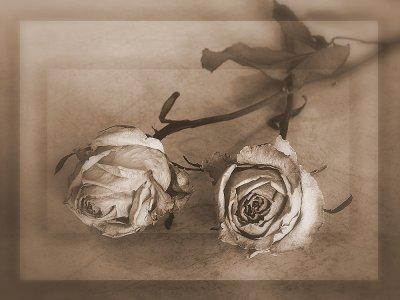 La guerre au vent, l'amour devant...