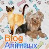 Chiens-chats
