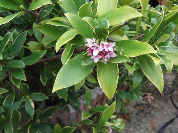 Articles de lescathydisa tagg s plantes page 5 - Plantes qui ne craignent pas le gel ...