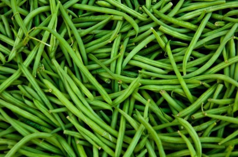 Haricot vert nature gastronomique et m dicinale - Variete de haricot vert ...