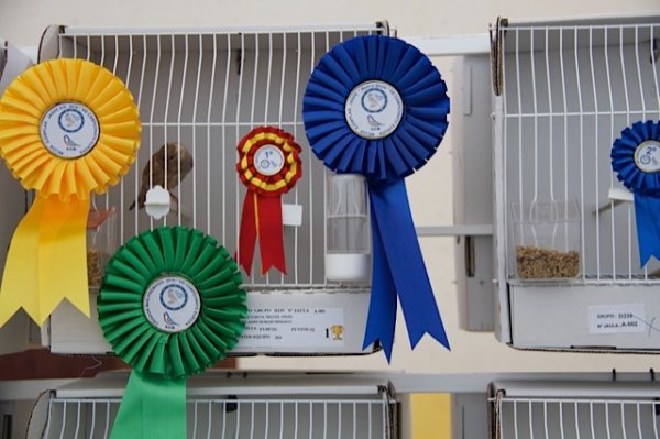 Concours europ�en du canari jaspe 2016 (B�nidorm)