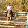 horse-raimbow