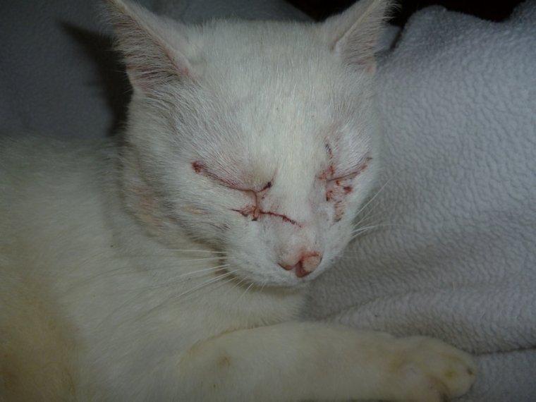 Notre Filou a chop� un virus par un chat qui lui a fait mal 39/9 de fi�vre .....�a va bien le v�to lui a fait des piquress
