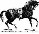 Photo de chevalcitations