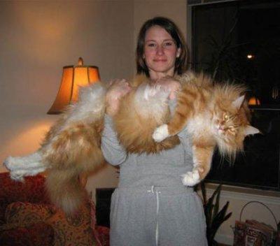 grand chat du monde ?