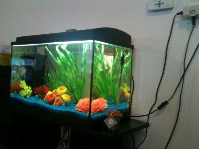 décoration aquarium poisson