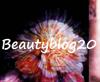 beautyblog20