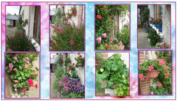 Elles ont souffert du manque de soleil , mais elles ont tout de m�me pousser, grandies, et maintenant je me r�gale de leurs couleurs �clatantes ....... Mes Fleurs  !!!