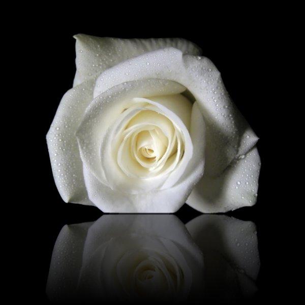 La signification des roses blog de dede collins de blues - Bouquet de roses signification ...