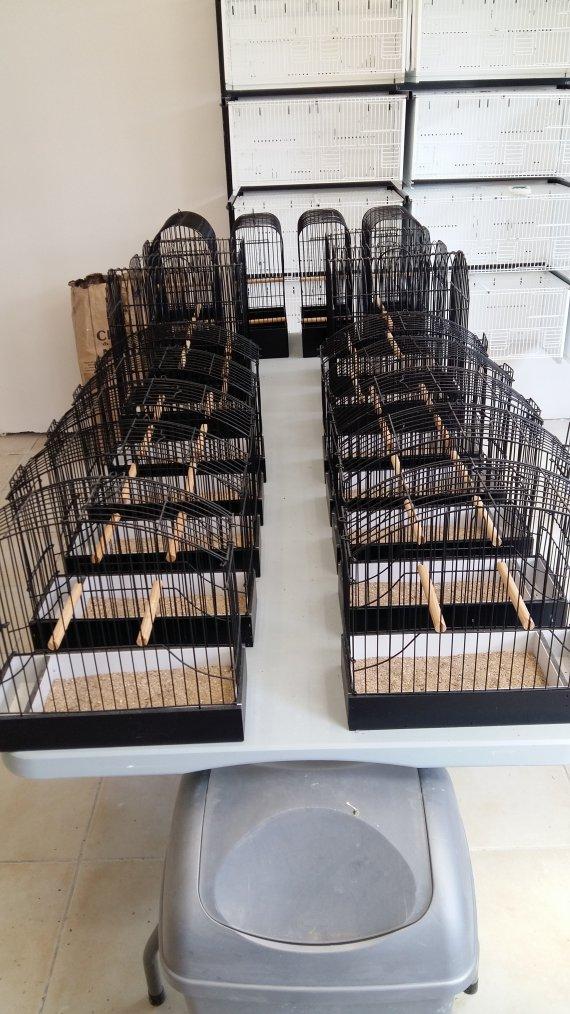 Voil� les cages d'exposition pour les postures netoy� � fond manque quelques cages fife et y'a plus qu'�
