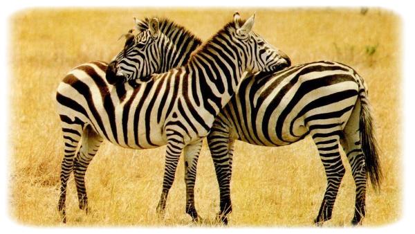 Bienvenue sur le blog Animal-Voice ! Lisa et Ana�s sont heureuses de vous accueillir.Voici une petite introduction avant le commencement. Vous seriez de vrais amours si vous lisiez et regardiez la colonne. :')