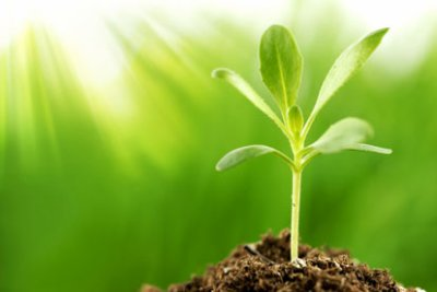 importance of plants in our life The main importance of plants in our lives are that they take in carbon dioxide (co2) that we breath out and in place they let out oxygen which we breath in without plants we would run out of.