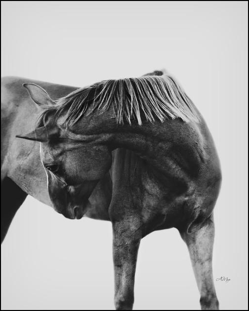 Rien n'égale la complicité entre un cavalier et son cheval.