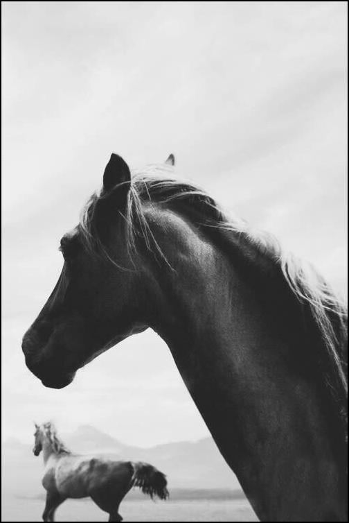 Tout homme à cheval a un pied dans la tombe mais il n'est de paradis qu'à cheval