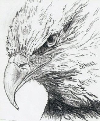 T te d 39 aigle pour les fans de d gray man ainsi que d - Dessin de aigle ...