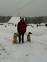 Championnats d'Europe de chiens de traineaux
