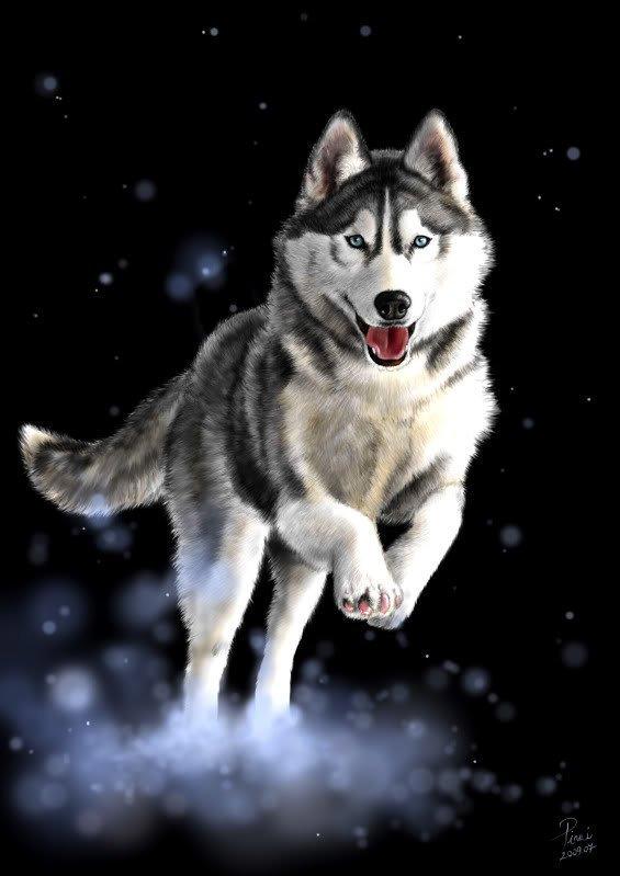 Painting White Dog Fur