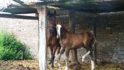 Il vaut mieux se fier à un cheval sans bride qu'à un discours sans ordre.