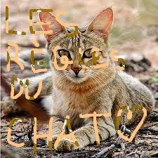 Les règles du chat
